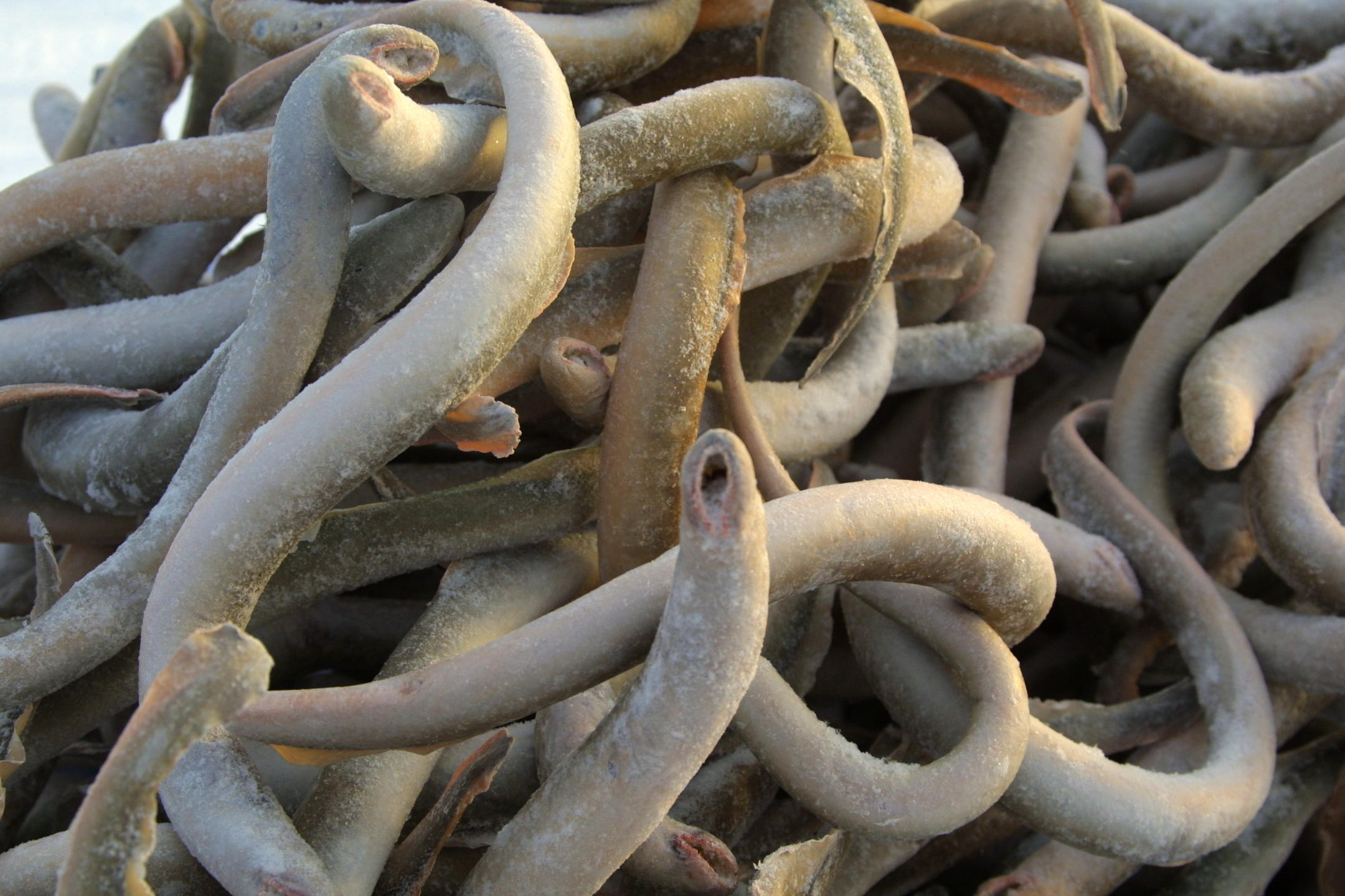 That is a bunch of FUCKING LAMPREYS.  They are a prehistoric, jawless fish.